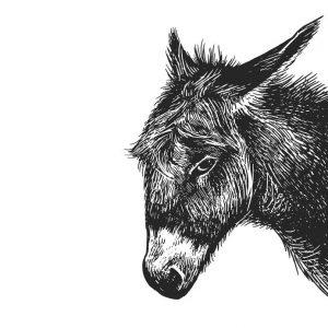 Persévérance, Têtu comme une mule